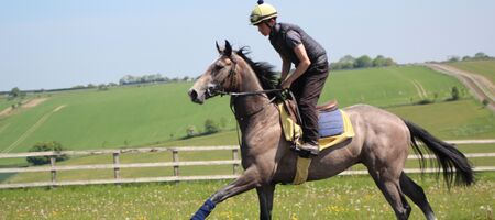 Richard's Guide; Three Factors To Training A Racehorse